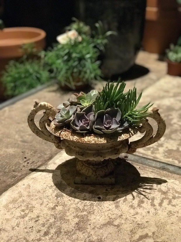 Planting Succulents in Tool 2