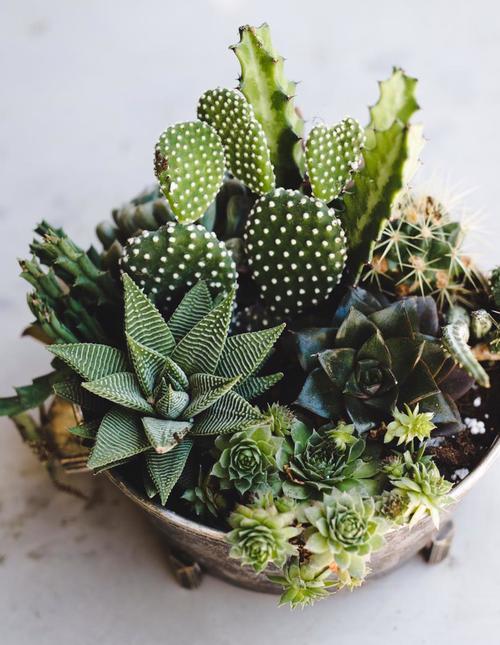 Planting succulent
