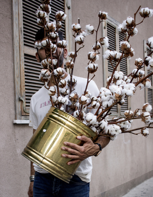 Dry Cotton